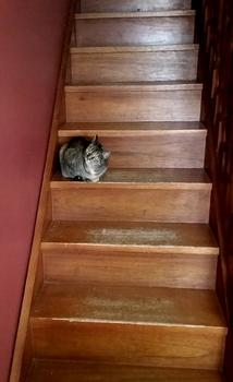 cat on the stairs at the Royal Arms BNB, Nimmitabel